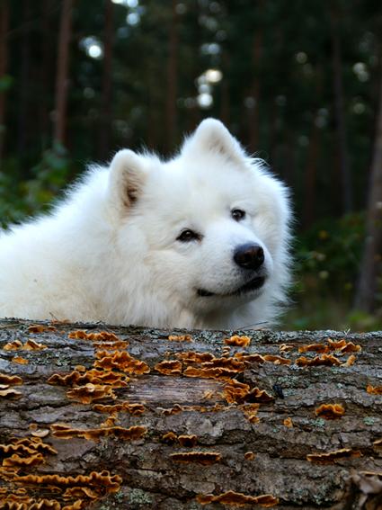 hundfysioterapeut